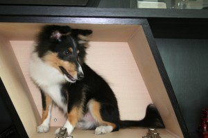 Bacchus, March 2008